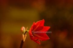 bunga 4